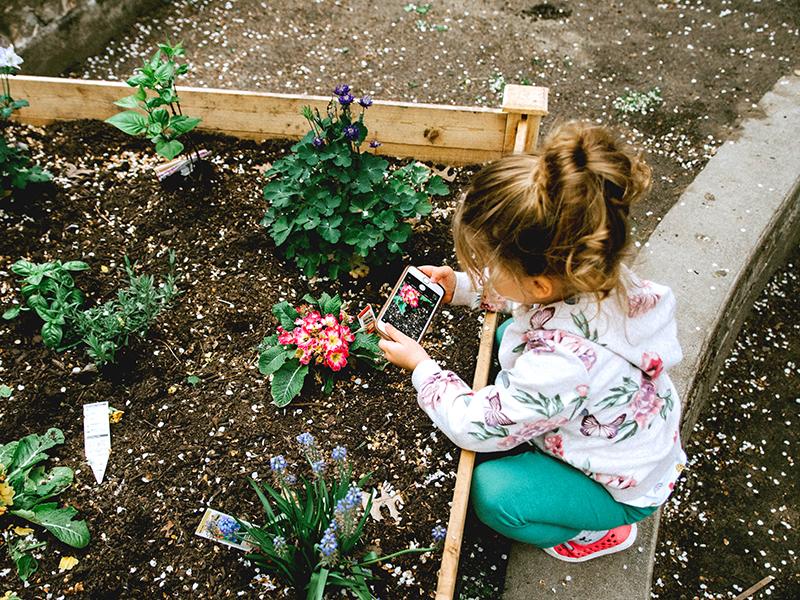 Como cuidar un jardín