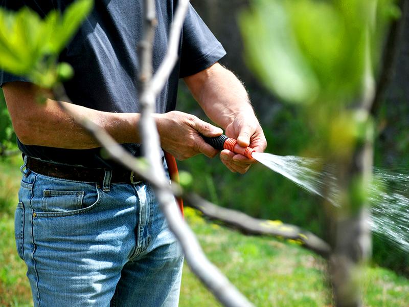 Cómo cuidar un jardín