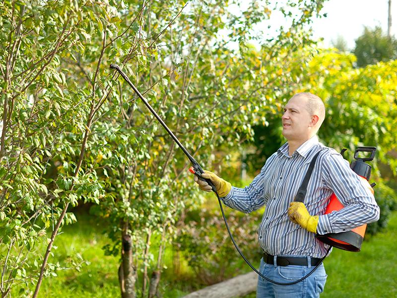 Cuidado jardín - Sulfatador